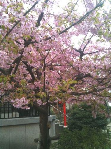 桜20120325_1.JPG