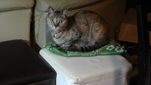 座布団と猫