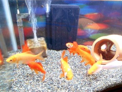 金魚水槽のフィルター