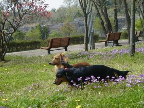 2004年4月修景池.jpg