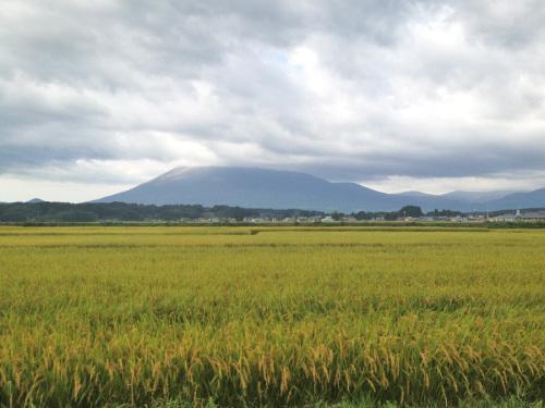 0917稲穂と岩手山.jpg