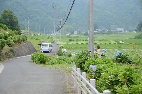 第4回枝川内あじさい祭り 160.jpg