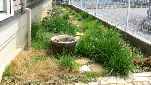 西洋芝が荒れ放題の庭