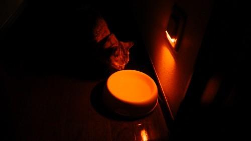 廊下の常夜灯前にある猫の水飲み場