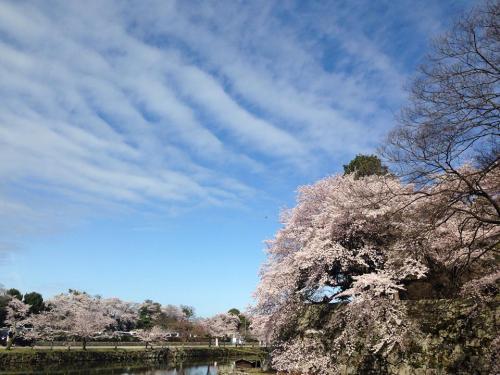 彦根城8.jpg