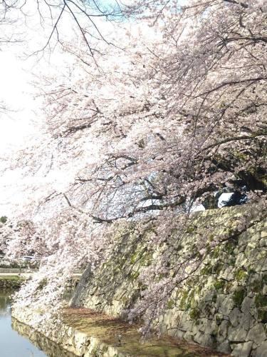彦根城の内堀.jpg