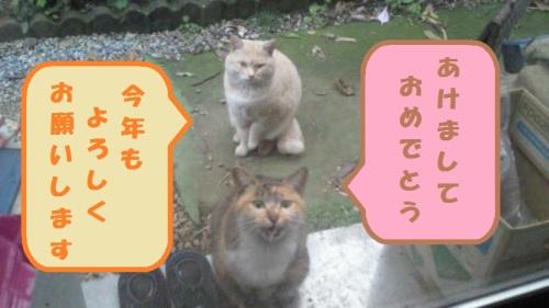 NEC_0417-2.jpg