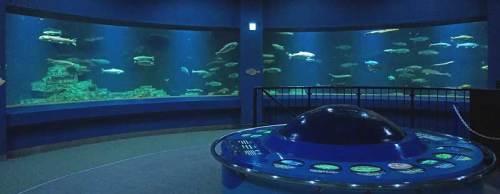 小樽水族館f170422回遊水槽.jpg