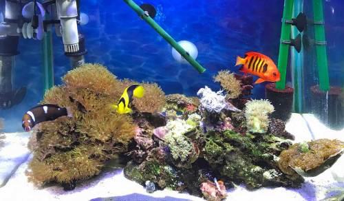 ユラユラ珊瑚水槽170628.jpg