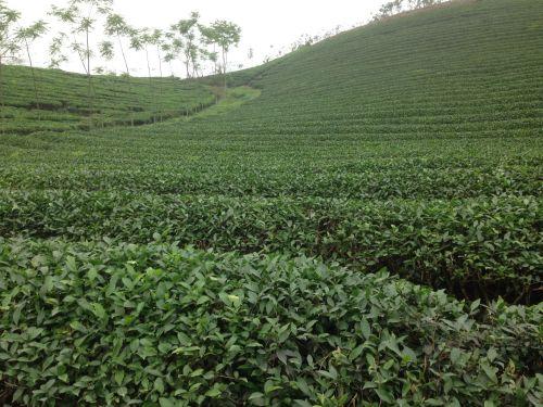 ベトナム茶2014-04-02 10.30.03.jpg
