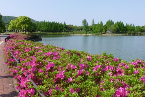 1公園入口大池.JPG