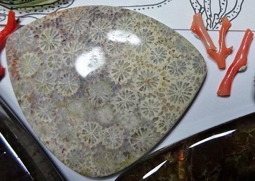珊瑚の化石と珊瑚.JPG