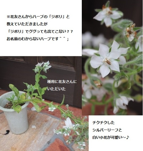 2014_0520_103605-IMG_7089.JPG