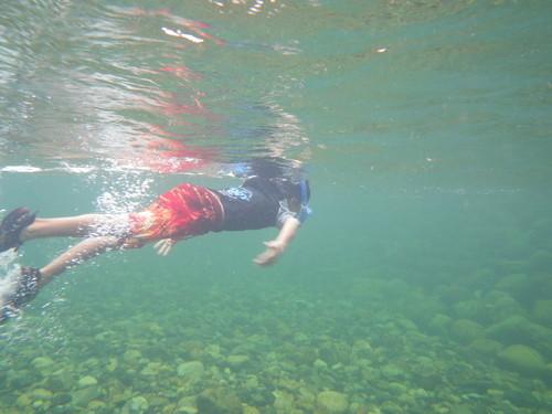1323 泳ぐK助.jpg