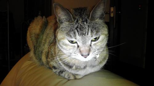 迷惑そうな表情の猫