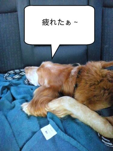 PhotoWonder_share1.jpg