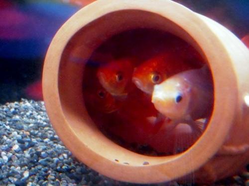 ジャンボ蛸壺