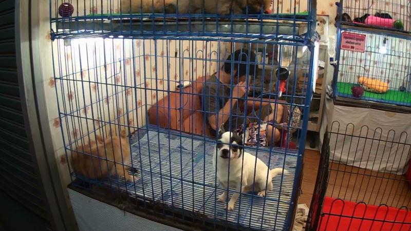 11-79-148 犬2.JPG
