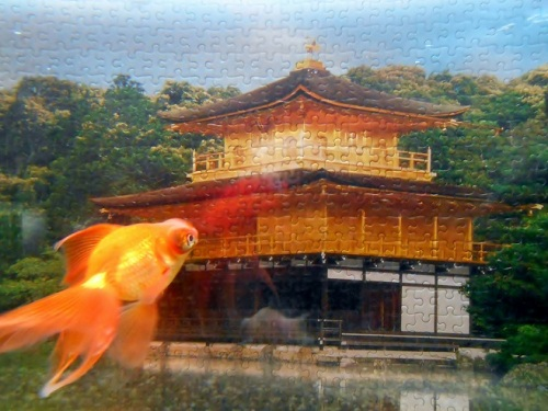 金魚と金閣寺