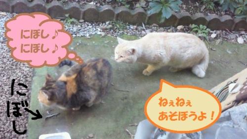NEC_1004.jpg