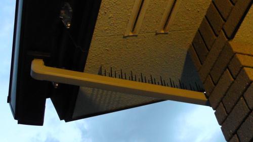 雨樋に鳥よけ