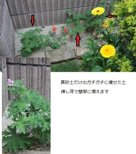 2014_0520_102225-IMG_7080.JPG
