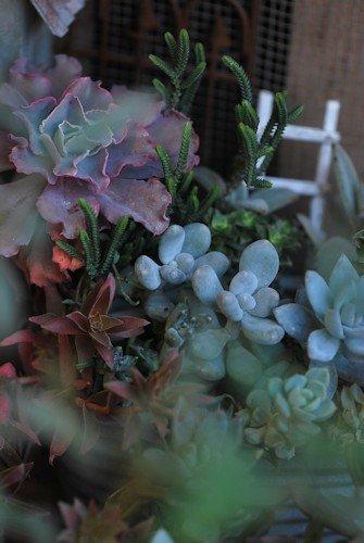 多肉ブリキオーバル寄せ植え20120126.jpg