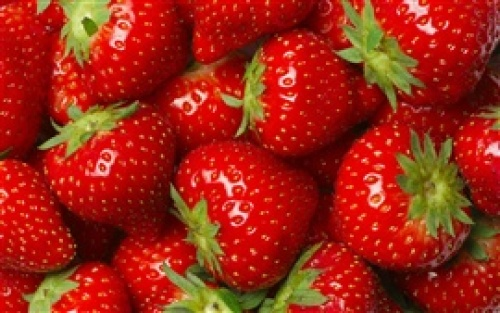 Many-strawberries-red-fruit-delicious_s.jpg