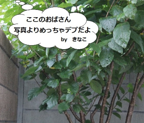 2014_0712_174801-IMG_3028.JPG