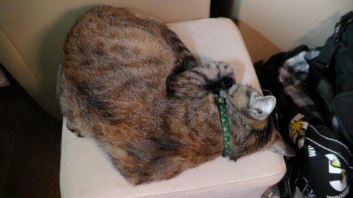 寝相に違和感がある猫