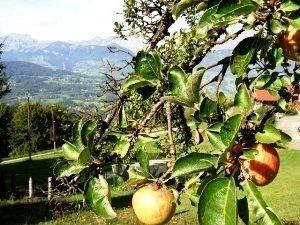 リンゴ(V.2014_11_13__09_22_46).jpg