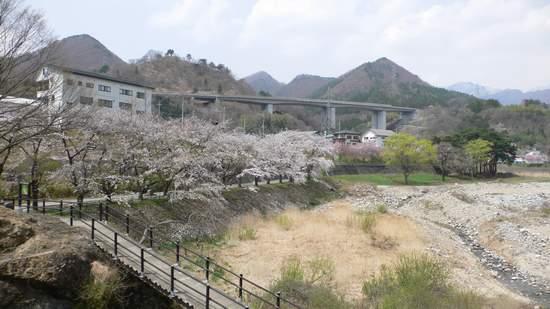 水上温泉_桜2.JPG