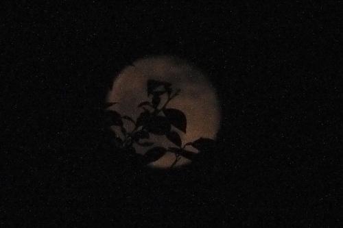 枝からのぞく月.jpg