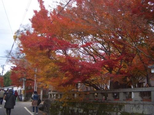 CIMG8678南禅寺脇道から紅葉.JPG