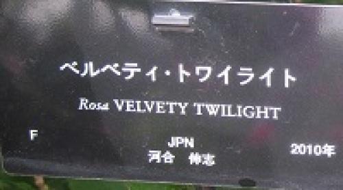 ベルベティ・トワイライト01.jpg