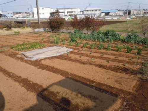 20120412松本栄次先生の畑1.jpg