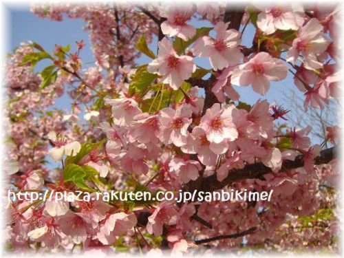 20120402_nagai_05.jpg