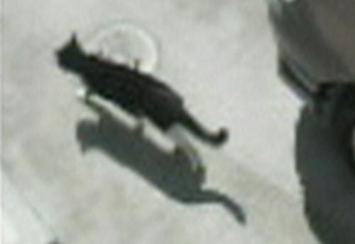 防犯カメラに写った猫