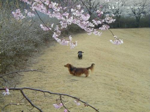 2004年4月フォレストアリーナ2.jpg