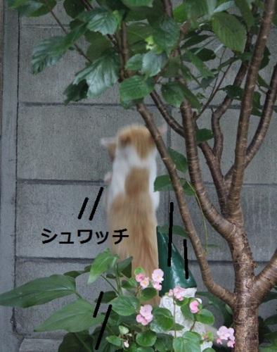 2014_0712_174800-IMG_3026.JPG
