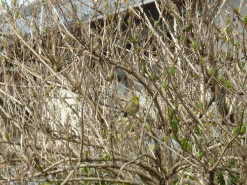 2012.03.22画像 004.jpg