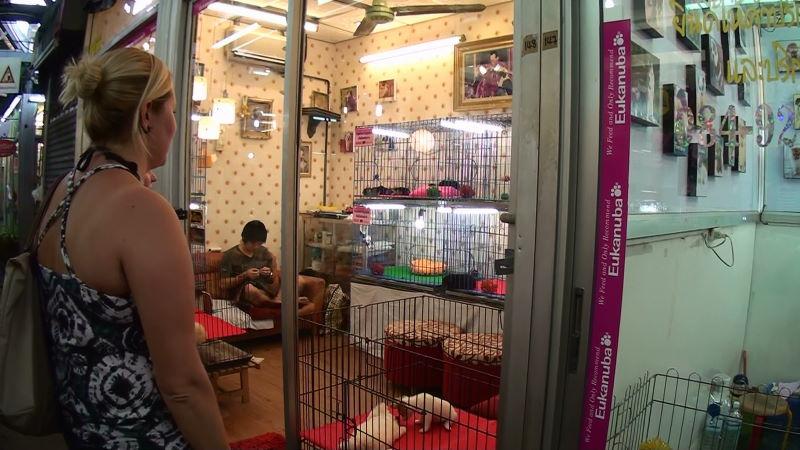 11-79-148~149 犬.JPG