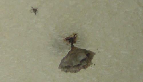 軒天に蜂の巣を発見