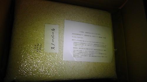 秋田県産スノーパール