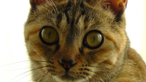 猫の顔面アップ