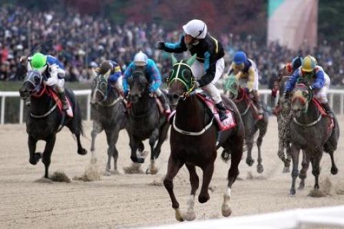 韓国競馬の様子.jpg