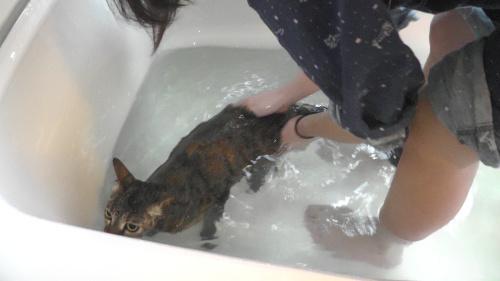 浴槽で猫をすすぐ