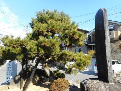 一乗寺下り松(京都・京都市)