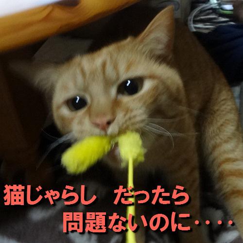 猫じゃらしなら‥‥.jpg