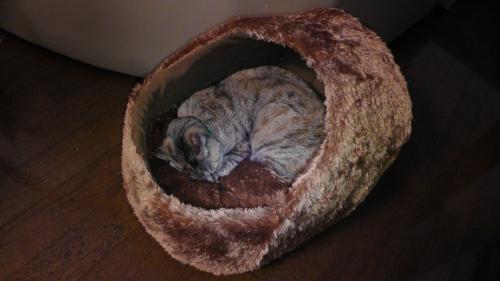 毛玉に入るネコ